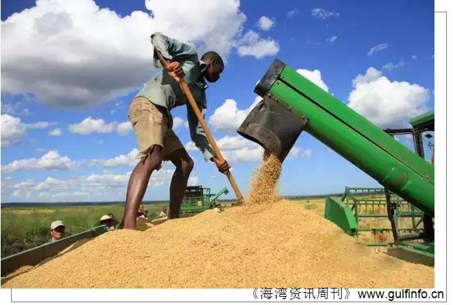 喀麦隆17个农业极点计划项目进展情况