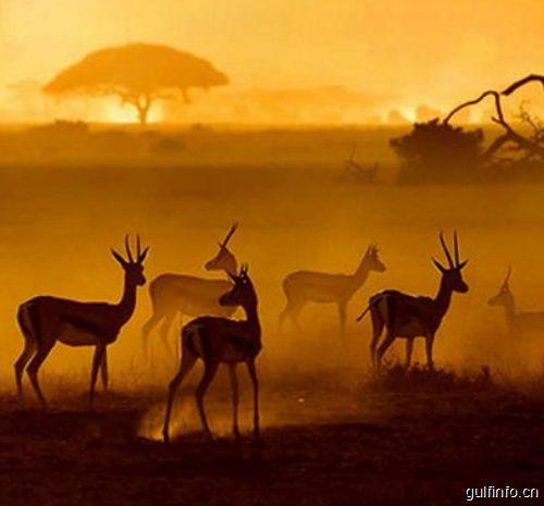 去肯尼亚旅游需要注意些什么?