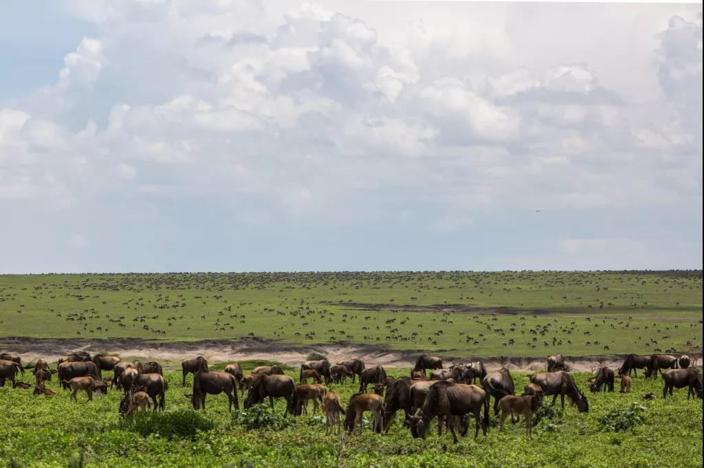 蓬勃发展,未来可期的坦桑尼亚旅游业