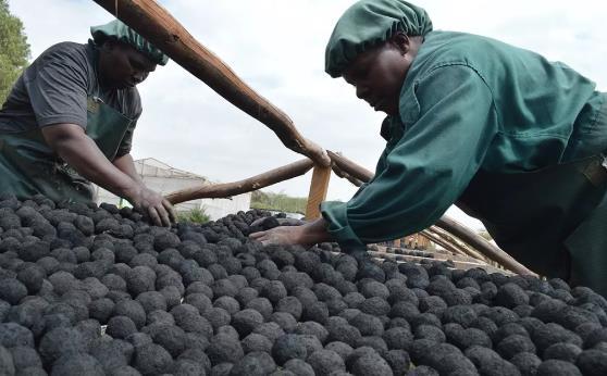 非洲将在20年内对全球能源形成巨大影响,有什么机遇可以抓住?